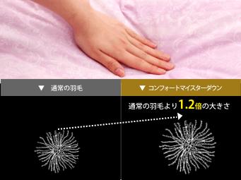 通常の羽毛とコンフォートマイスターダウンの比較。通常の羽毛より1.2倍の大きさ